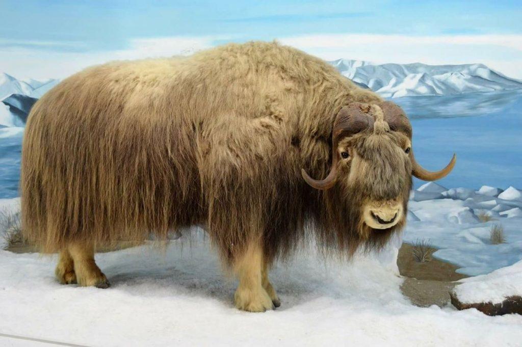 Mammoth Cave Wildlife Museum